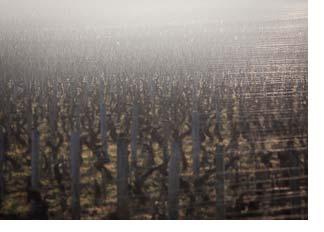 2016 Burgundy en primeur