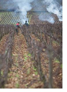 2018 Burgundy en primeur introduction
