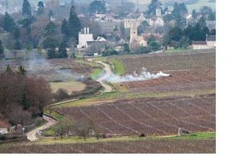 2019 Burgundy en primeur introduction
