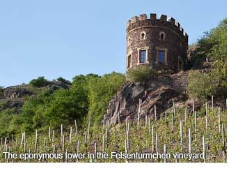 Felsenturmchen vineyard