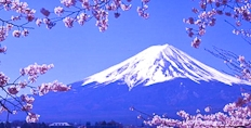 Mount Fuji at cherry blossom time