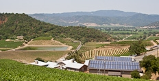 Shafer vineyards in the Napa valley