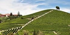 The Monvigliero vineyard in Verduno