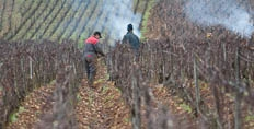 2018 Burgundy en primeur introduction