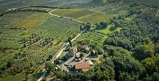Lisini's Ugolaia vineyard in Montalcino