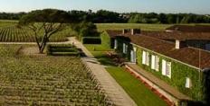 Meyney vineyard