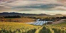 Dog Point vineyards, Marlborough