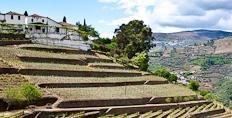 Quinta Do Noval in the Douro valley