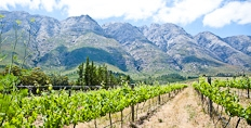 Tulbagh mountain vineyards